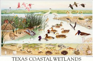 Texas coastal wetlands, an image in Texas Aquatic Science by author Rudolph Rosen