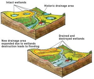 Flood control wetlands, an image in Texas Aquatic Science by author Rudolph Rosen