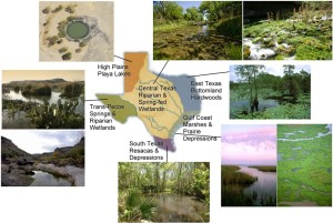 Wetlands Texas, an image in Texas Aquatic Science by author Rudolph Rosen