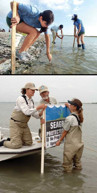 Volunteers restore seagrass, an image in Texas Aquatic Science by author Rudolph Rosen