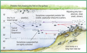 Fish habitats and structure in a lake, an image in Texas Aquatic Science by author Rudolph Rosen
