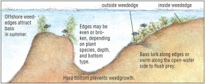 Fish habitat and edge effect, an image in Texas Aquatic Science by author Rudolph Rosen