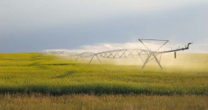Crop water irrigation uses water, an image in Texas Aquatic Science by author Rudolph Rosen