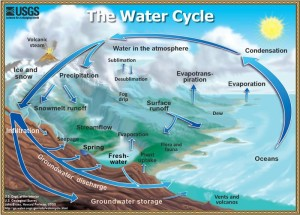 Water cycle by the US Geological Survey, an image in Texas Aquatic Science by author Rudolph Rosen