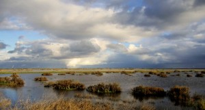 Wetlands and rain clouds, an image in Texas Aquatic Science by author Rudolph Rosen