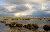 Rain over wetlands, an image in Texas Aquatic Science by author Rudolph Rosen