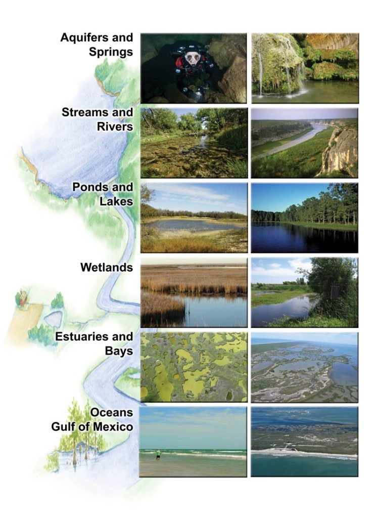 Aquatic ecosystems in Texas, an image in Texas Aquatic Science by author Rudolph Rosen