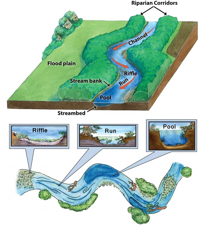 Stream parts, run, riffle and pool, an image in Texas Aquatic Science by author Rudolph Rosen