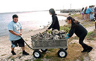 Oyster recycling by students, an image in Texas Aquatic Science by author Rudolph Rosen