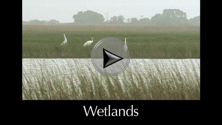 Wetlands a video in Texas Aquatic Science by author Rudolph Rosen
