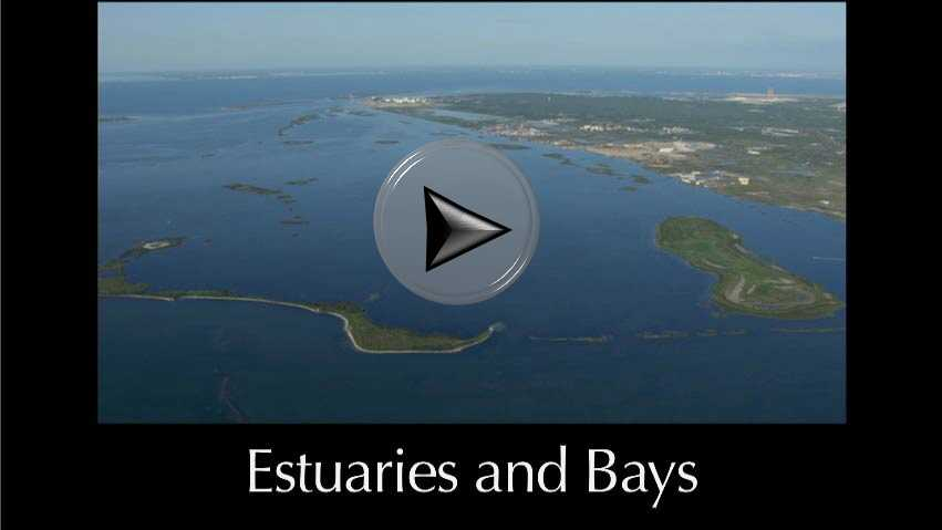 Estuaries and Bays a video in Texas Aquatic Science by author Rudolph Rosen
