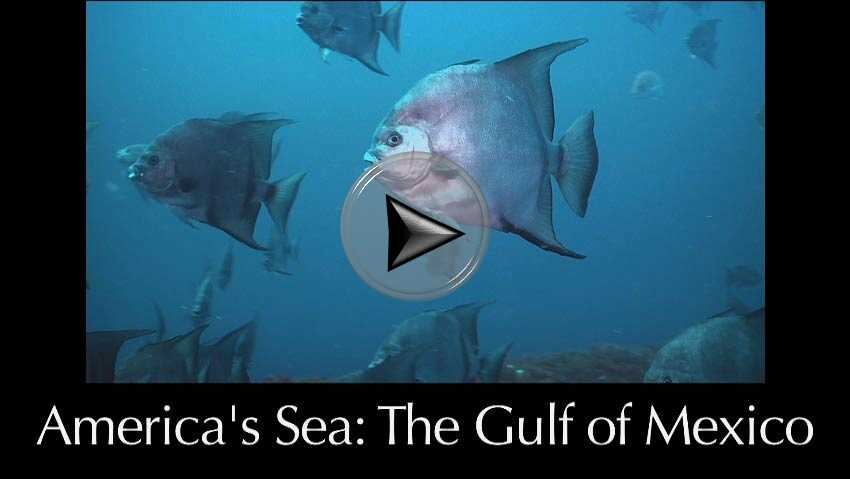 America's Sea: the Gulf of Mexico a video in Texas Aquatic Science by author Rudolph Rosen