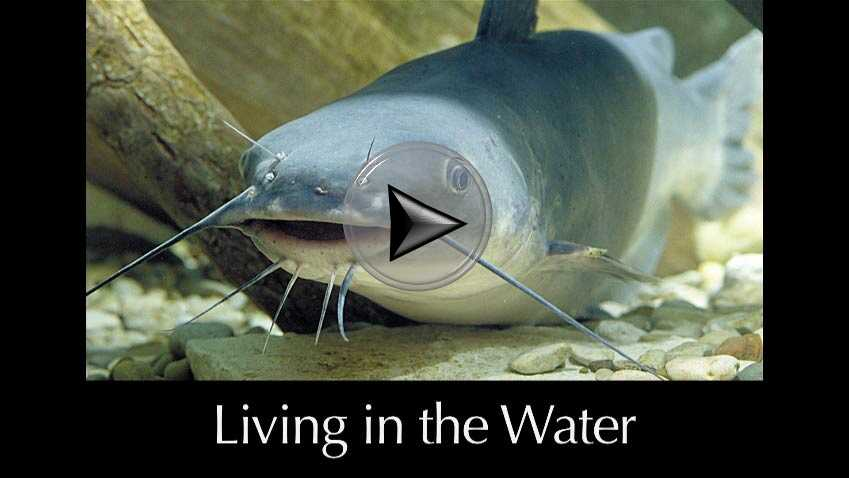 Living in the Water a video in Texas Aquatic Science by author Rudolph Rosen