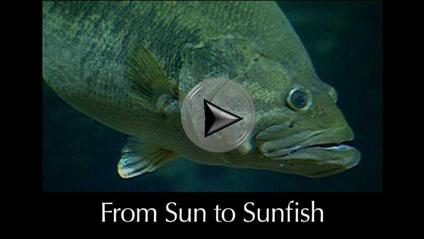 From Sun to Sunfish a video in Texas Aquatic Science by author Rudolph Rosen