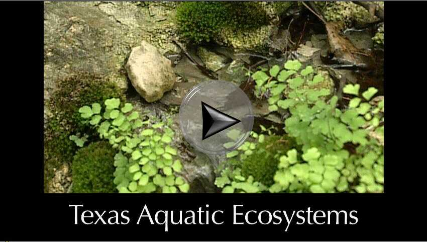 Texas Aquatic Ecosystems a video in Texas Aquatic Science by author Rudolph Rosen