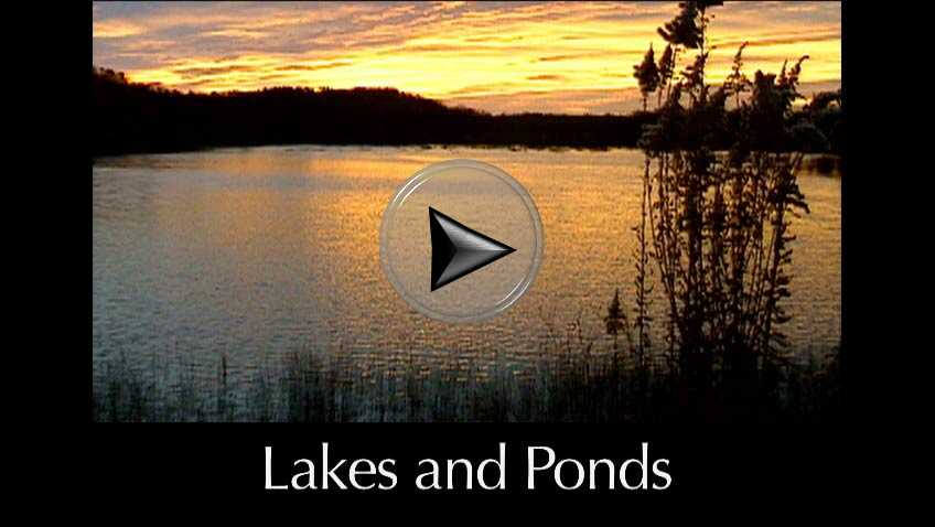 Lakes and Ponds a video in Texas Aquatic Science by author Rudolph Rosen