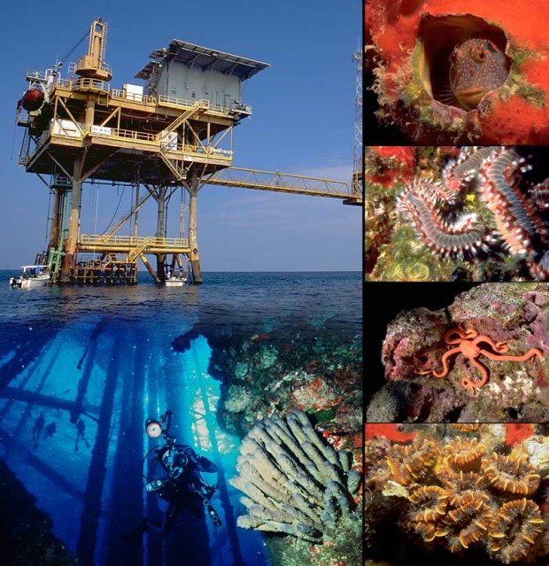 Coral reef habitat on an oil rig in the Gulf of Mexico, an image in Texas Aquatic Science by author Rudolph Rosen