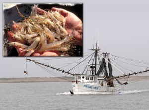 Shrimp boat in Texas Bay, an image in Texas Aquatic Science by author Rudolph Rosen