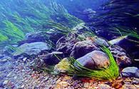 C8_thmb2_-aquatic-science-texas