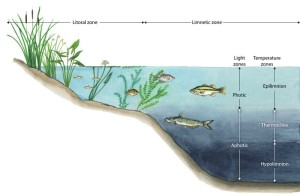 Lake and reservoir zones, an image in Texas Aquatic Science by author Rudolph Rosen