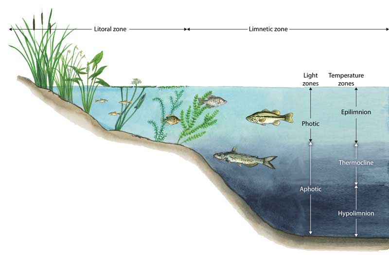 intertidal zones as significant environment for organisms and producers Biotic factors of the intertidal zone a biotic factor is any living component that affects another organism, including animals that consume the organism in question, and the living food that the organism consumes.