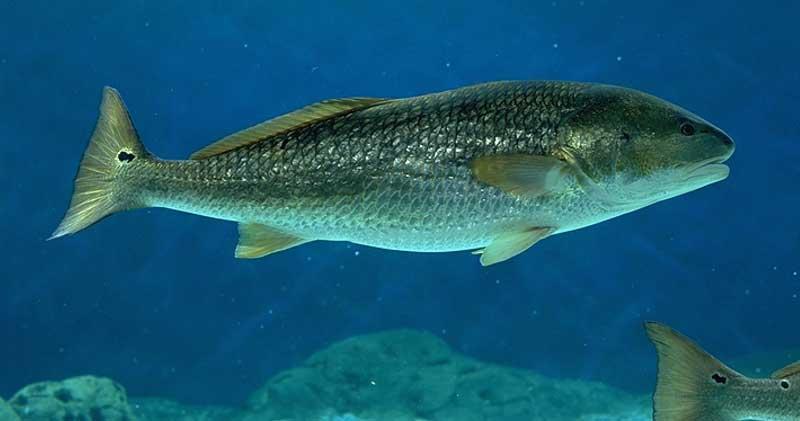 Adaptation to Aquatic Ecosystems - Texas Aquatic Science