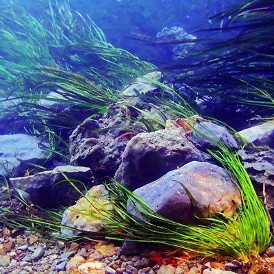 Learn Mo Environment Texas - Mariagegironde